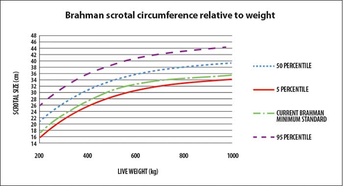 Details of normal scrotal circumference in the Australian Brahman bull population are provided in Figure 1
