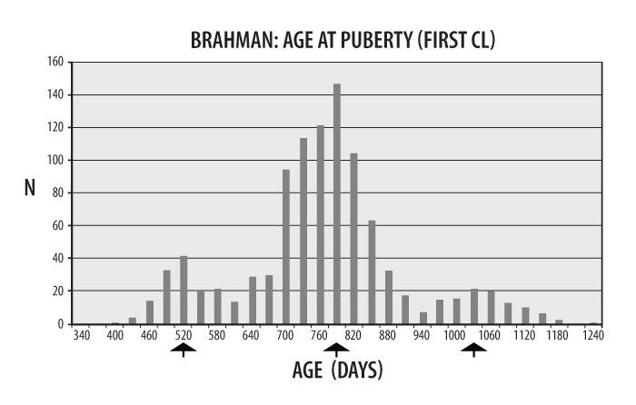 Figure 1:  Distribution of Age of Puberty for Brahmans