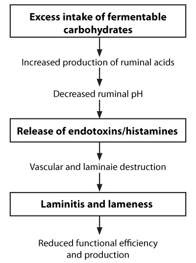 Diagram 2:  Nutritional causes of Laminitis