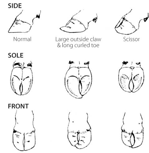FIGURE 3: EXAMPLES OF FOOT DEFECTS